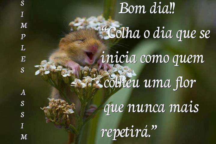Bom Dia Meu Amor Para Fazer O Dia Da Pessoa Amada Mais Feliz: Frases De Bom Dia